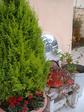 garden 17.JPG